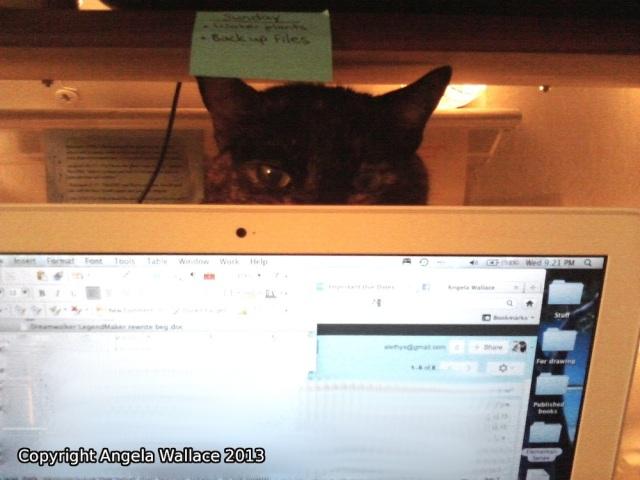 LOL cat 3
